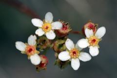 Blumen auf dem Almageller Höhenweg