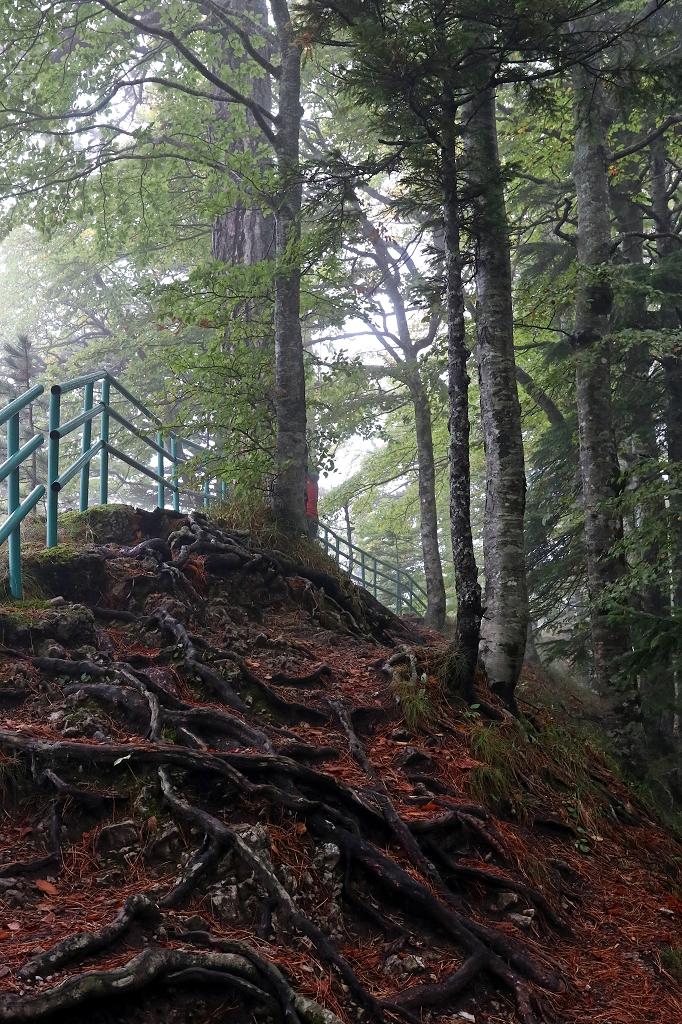 Weg zum Skakavac Wasserfall im Sutjeska-Nationalpark