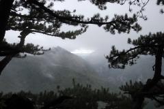 Peruca Urwald im Sutjeska-Nationalpark