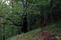 Perućica Urwald am Vidikovac Beškita im Sutjeska-Nationalpark