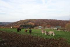 Elfringhauser Schweiz - Felder des Bergerhofs