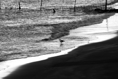 Eissturmvogel am Strand auf den Färöer
