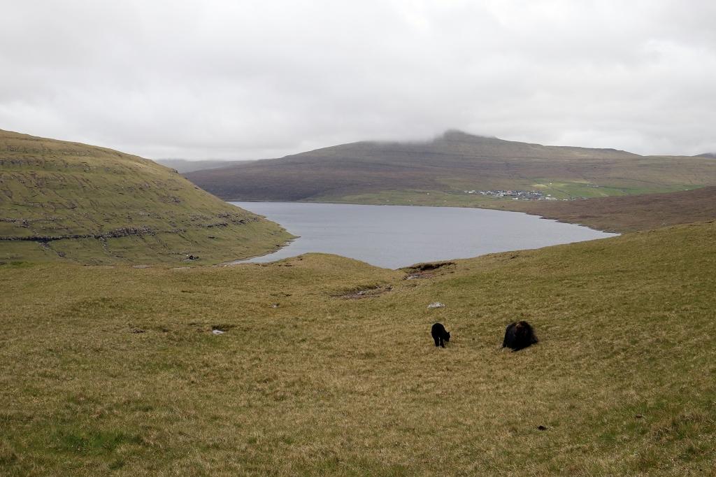 Abstieg über einen Grasweg zum Bøsdalafossur