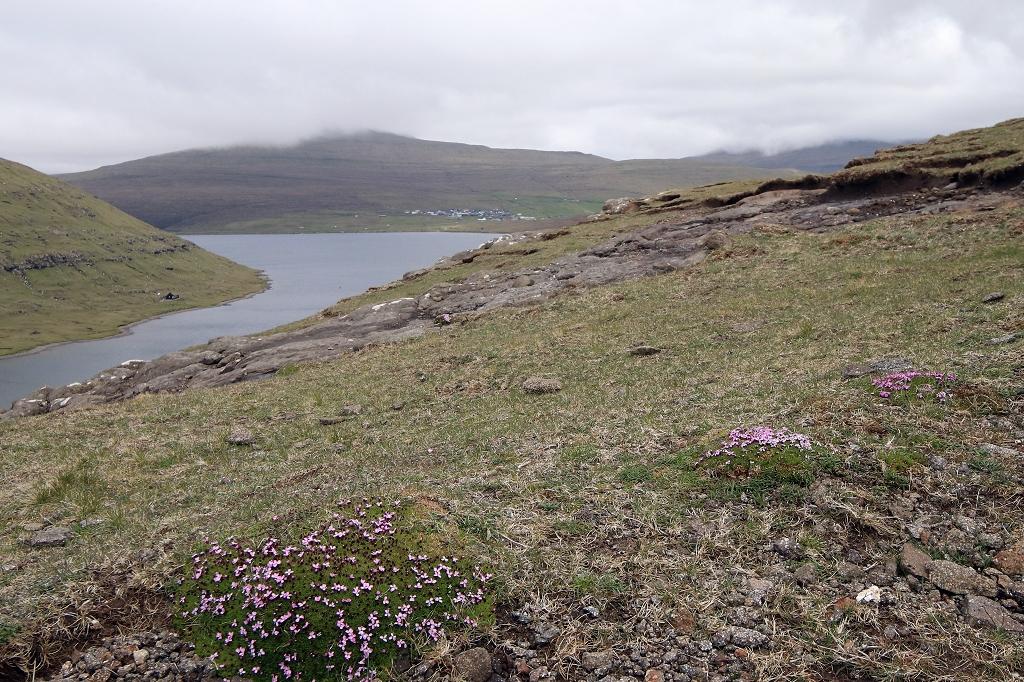 Abstieg über Gras und Felsen zum Bøsdalafossur
