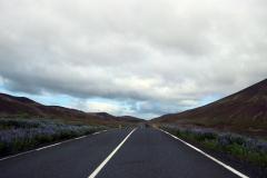 Straße 42 Richtung Reykjavik, Island
