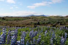 Aussichtspunkt mit Blick auf den Gletscher Mýrdalsjökull