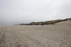 Fahrradtour in den Westen der Insel Juist - Billriff