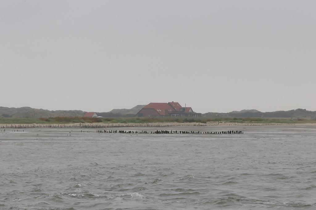 Vogelausflug zur Insel Memmert - Bill´s Domäne