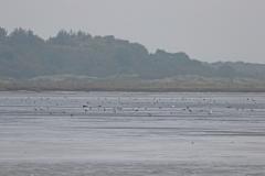 Vogelausflug zur Insel Memmert