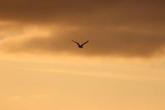 Sonnenuntergangsstimmung auf der Rückfahrt von Memmert nach Juist