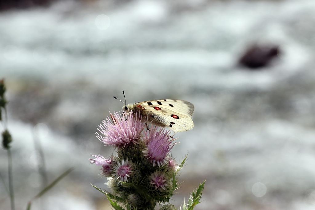 Schmetterlinge und bunte Blumen am Wegesrand des Turgen-Tals