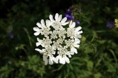 Bunte Blumen am Wegesrand des Turgen-Tals
