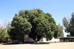 Auf dem Gelände der Scharkent Moschee