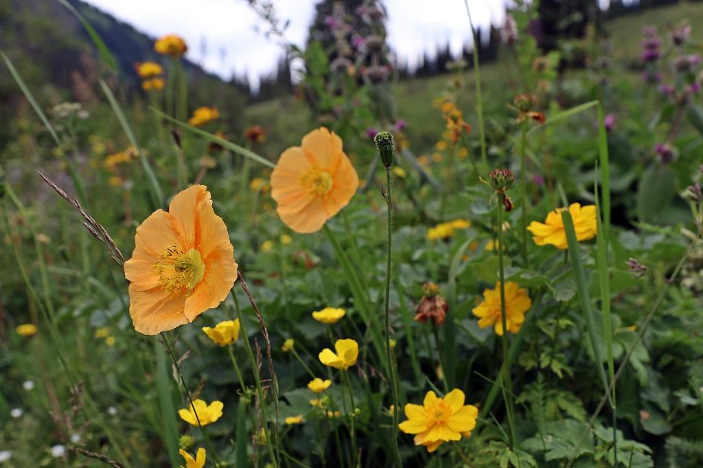 Blumenpracht am Kolsaisee