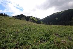 Blumenwiese am Kolsaisee