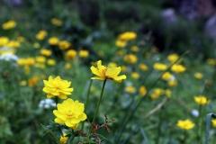 Bunte Blumen wohin man schaut