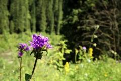 Flora am Kaindysee