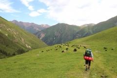 Saftige Wiesen im Altyn-Araschan-Tal