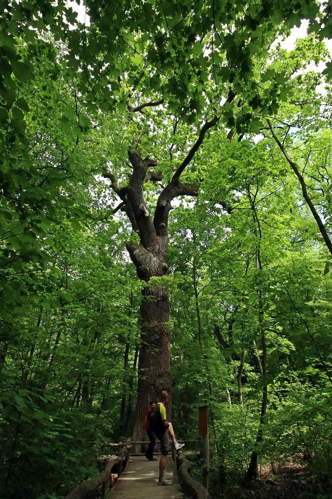 Nationalpark Hainich Rundweg Waldpromenade