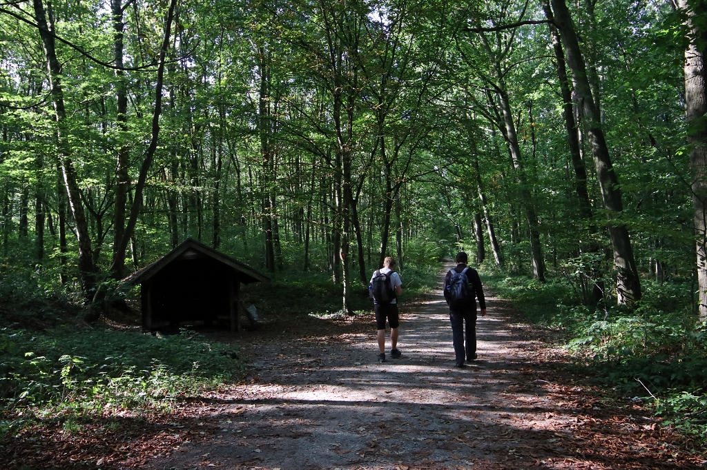 Neanderlandsteig Etappe 8: Von Mülheim-Selbeck nach Ratingen - Hinkesforst