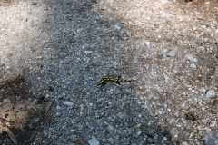 Salamander auf dem neanderlandSTEIG