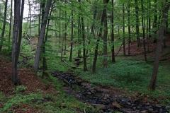 Kaskadenschlucht auf der Extratour Rotes Moor in der Rhön