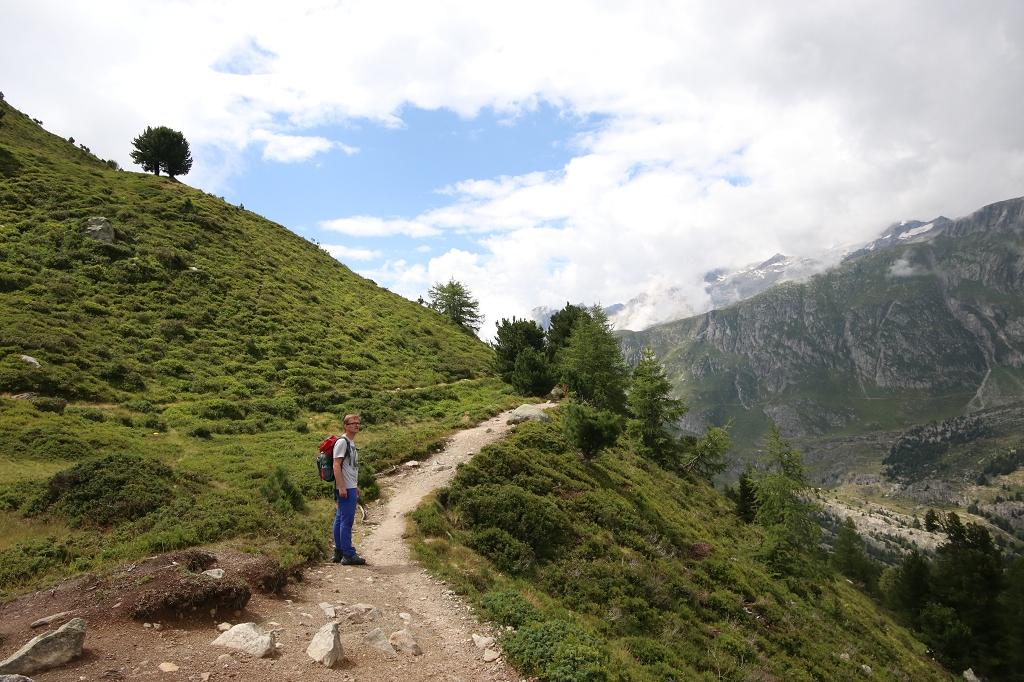Zurück auf dem Hauptweg im Aletschwald