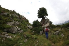 Die ersten Bäume auf dem Oberen Aletschweg