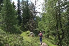 Im idyllischen Aletschwald