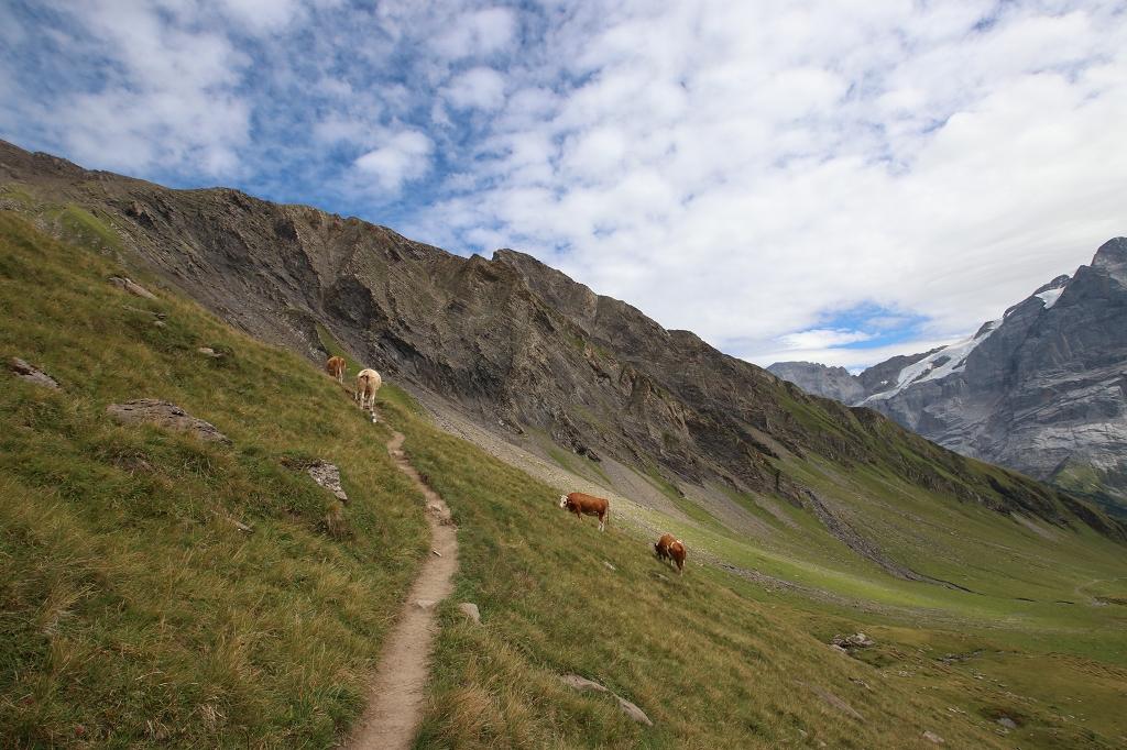 Durch den Distelboden zurück zur Bergstation First