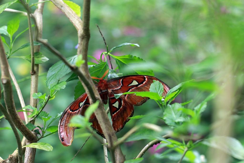 Falter im Papiliorama
