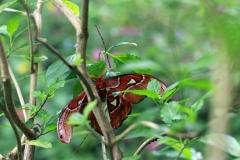 Schmetterlinge im Papiliorama