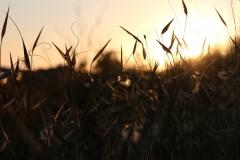 Sonnenuntergang in Punta Grande Sizilien