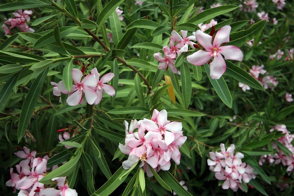 Blumen auf Vulcano