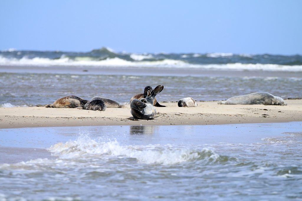 Vlieland: Ausflug zu den Seehunden   TheTravelholics