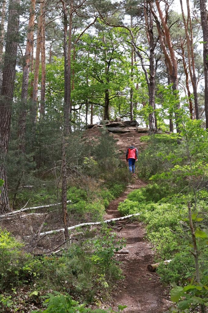 Von der Klosterruine Limburg zur Schlossruine Hardenburg - Brezelstein