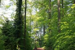 Auf dem Weg zum Adlerbogen auf dem Donnersberg