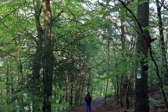 Auf dem Keltenweg zum Adlerbogen auf dem Donnersberg