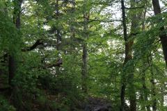 Auf dem Keltenpfad zum Adlerbogen auf dem Donnersberg